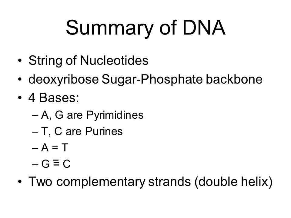 Summary of DNA String of Nucleotides deoxyribose Sugar-Phosphate backbone 4 Bases: –A, G are Pyrimidines –T, C are Purines –A = T –G = C Two complemen