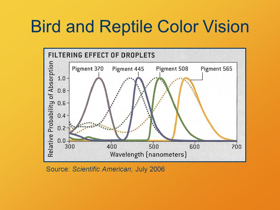 Bird and Reptile Color Vision Source: Scientific American, July 2006
