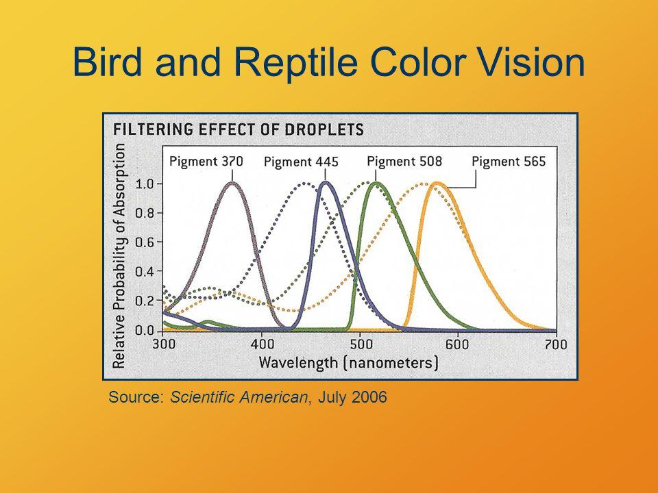Primary Rainbow: 1 Reflection Source: Griffith, Physics of Everyday Phenomena 40° 42°