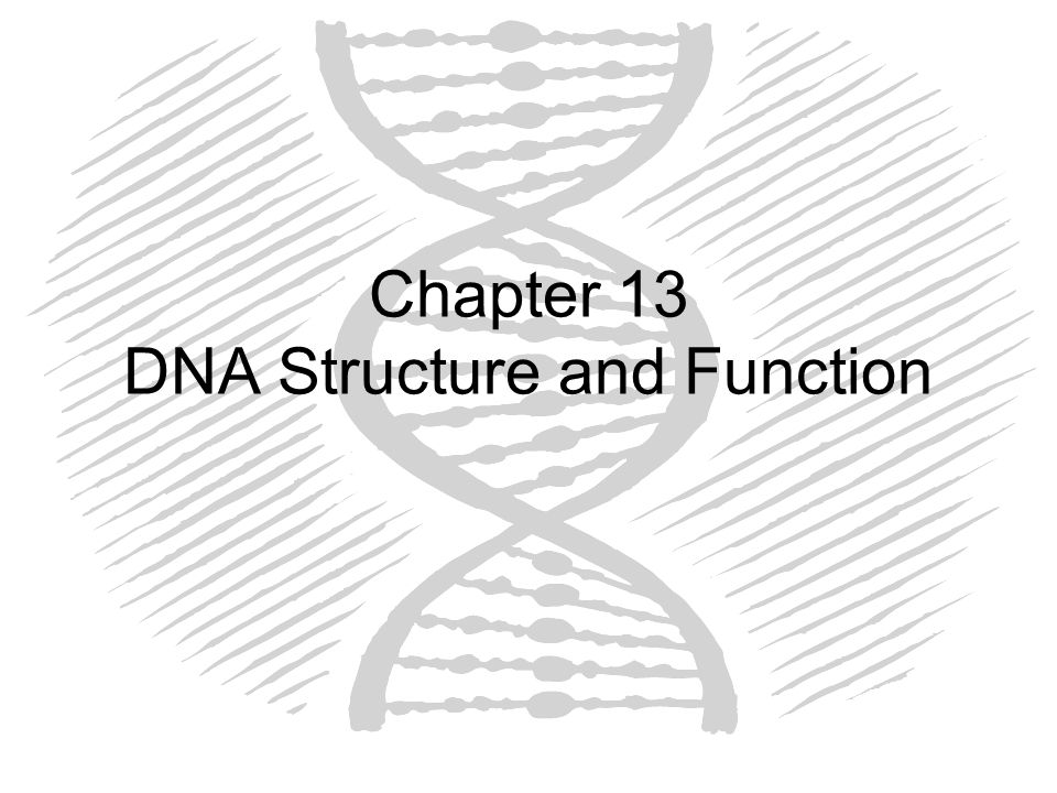 Watson and Crick Used numerous sources of data to build models of DNA Following features were –Single-ringed thymine was hydrogen bond with double ringed adenine and single-ringed cytosine with double ringed guanine, along the entire length of the molecule –Backbone was made of chains of sugar-phosphate linkages –The molecule was double stranded and looked like a ladder with a twist to form a double helix