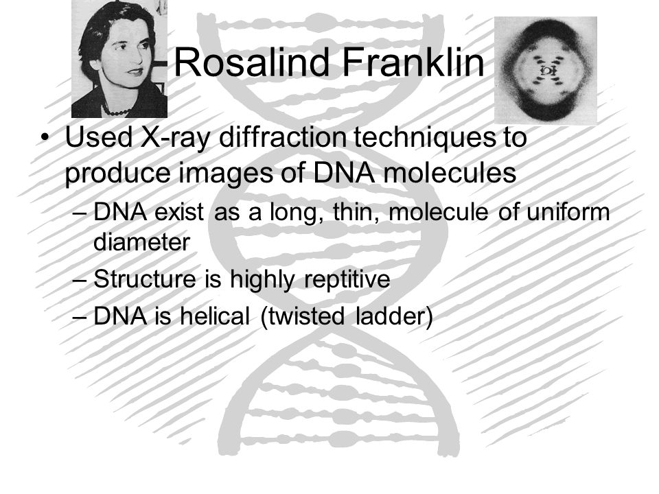 Rosalind Franklin Used X-ray diffraction techniques to produce images of DNA molecules –DNA exist as a long, thin, molecule of uniform diameter –Struc