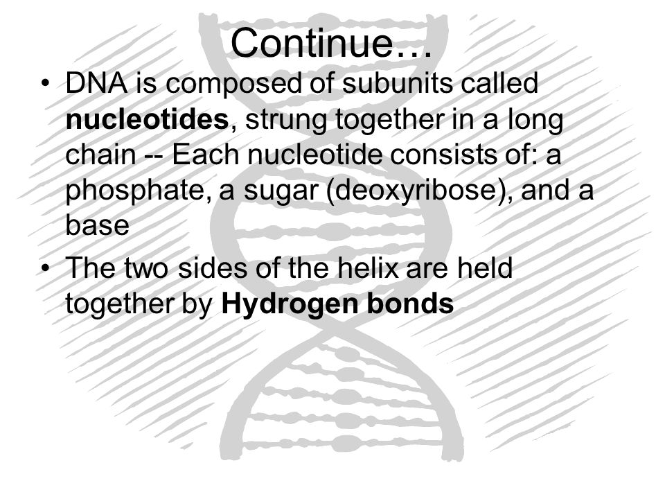 Continue… DNA is composed of subunits called nucleotides, strung together in a long chain -- Each nucleotide consists of: a phosphate, a sugar (deoxyr