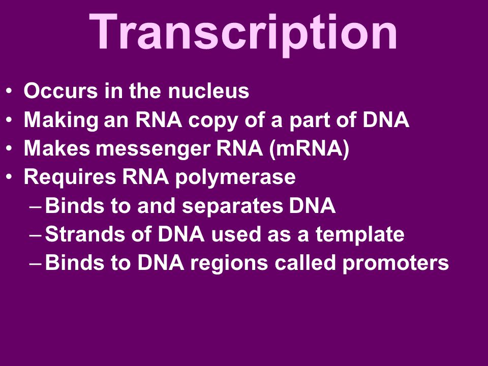 Transcription Occurs in the nucleus Making an RNA copy of a part of DNA Makes messenger RNA (mRNA) Requires RNA polymerase –Binds to and separates DNA