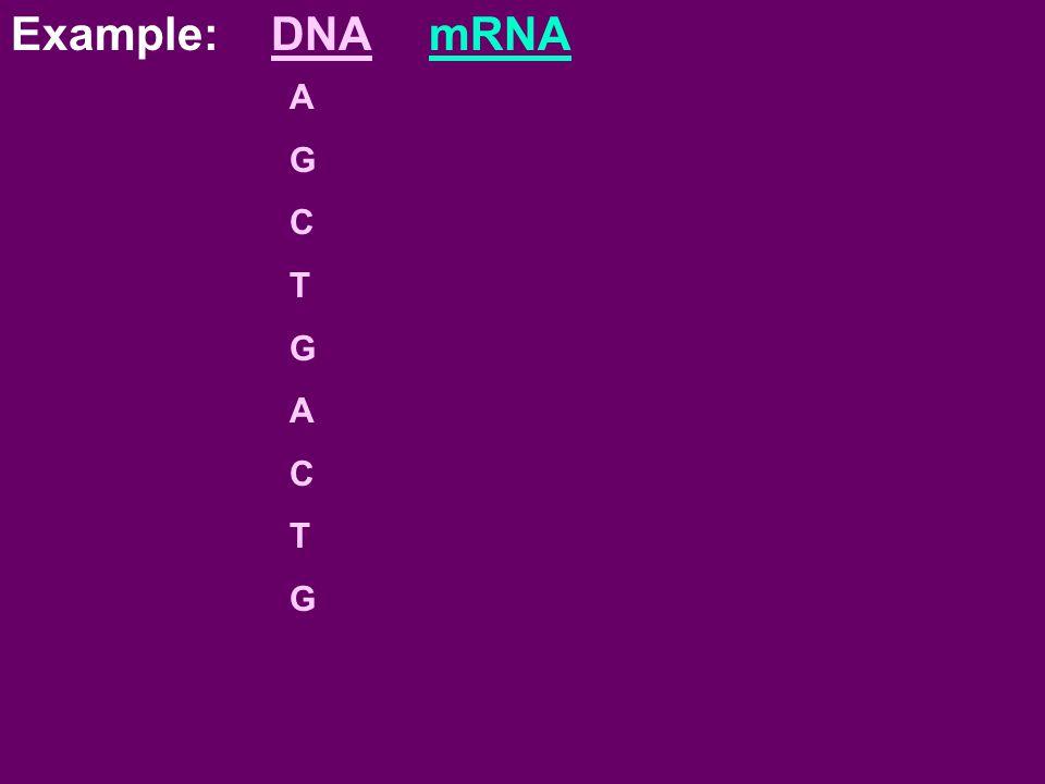 Example: DNAmRNA AGCTGACTGAGCTGACTG