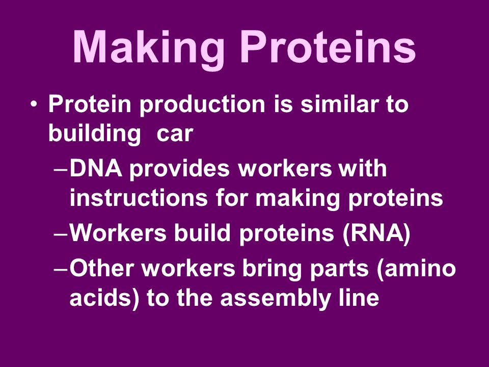 Making Proteins Protein production is similar to building car –DNA provides workers with instructions for making proteins –Workers build proteins (RNA) –Other workers bring parts (amino acids) to the assembly line