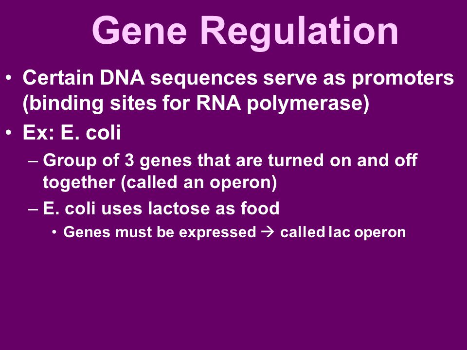 Gene Regulation Certain DNA sequences serve as promoters (binding sites for RNA polymerase) Ex: E. coli –Group of 3 genes that are turned on and off t
