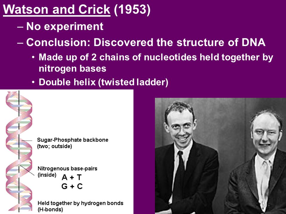 Watson and Crick (1953) –No experiment –Conclusion: Discovered the structure of DNA Made up of 2 chains of nucleotides held together by nitrogen bases
