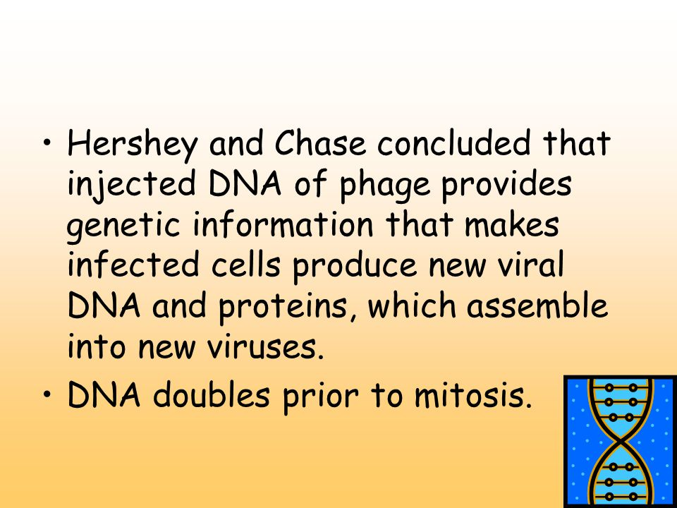 Hershey and Chase concluded that injected DNA of phage provides genetic information that makes infected cells produce new viral DNA and proteins, which assemble into new viruses.