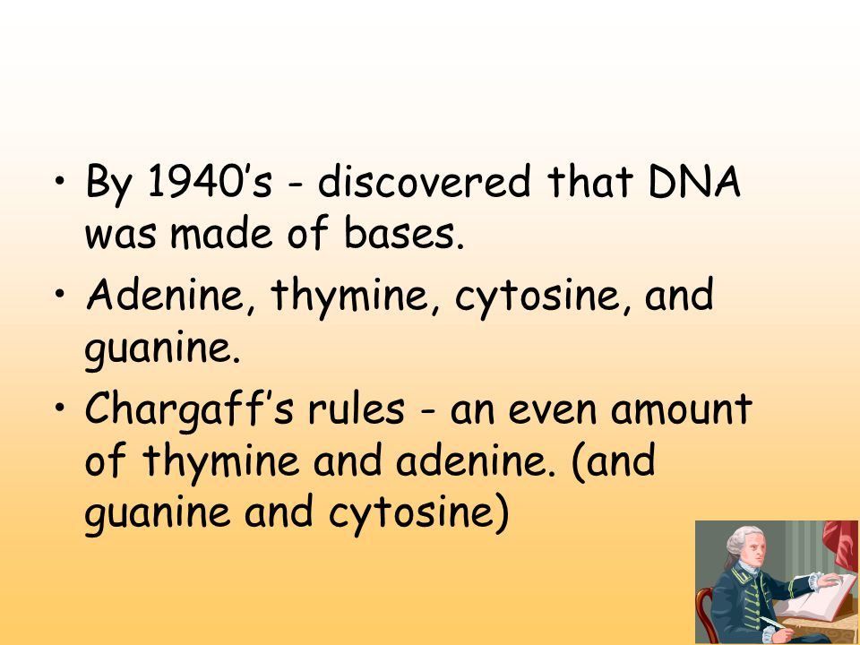 By 1940's - discovered that DNA was made of bases.