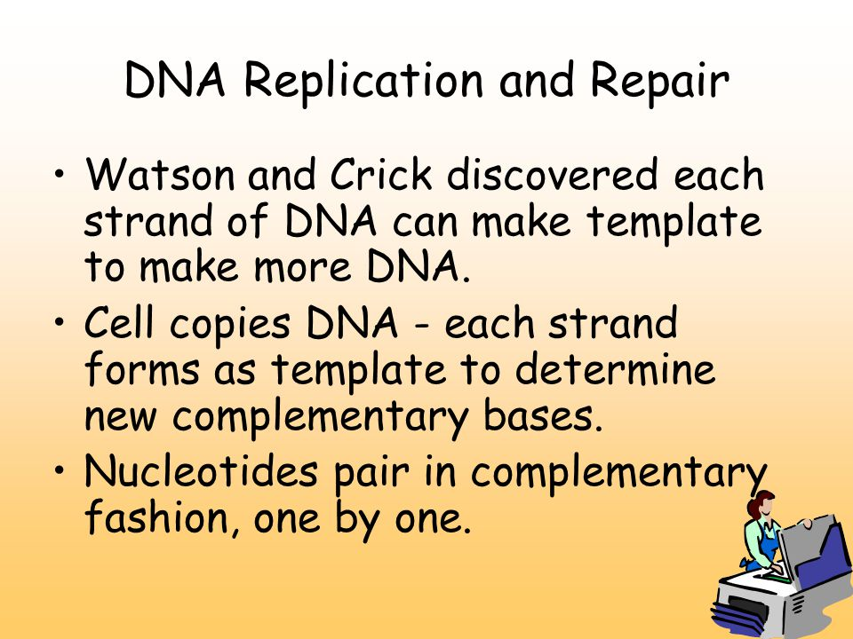 DNA Replication and Repair Watson and Crick discovered each strand of DNA can make template to make more DNA.