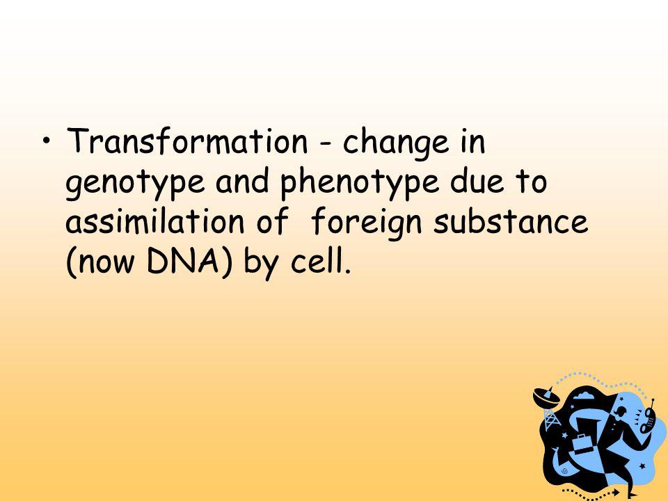Strands of DNA - antiparallel.Sugar-phosphate backbones run in opposite directions.