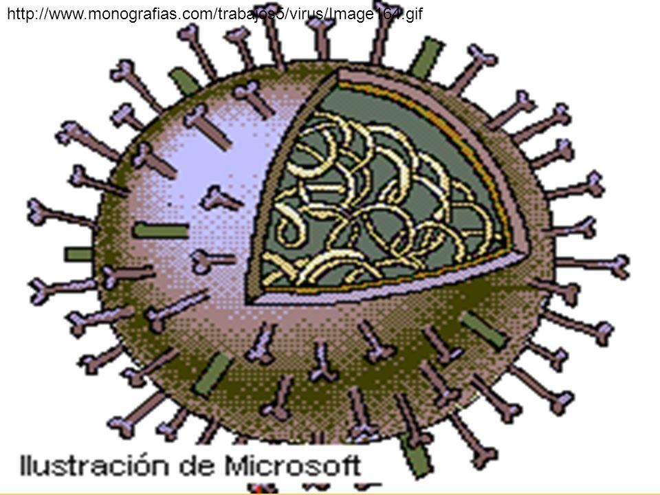 http://www.monografias.com/trabajos5/virus/Image164.gif