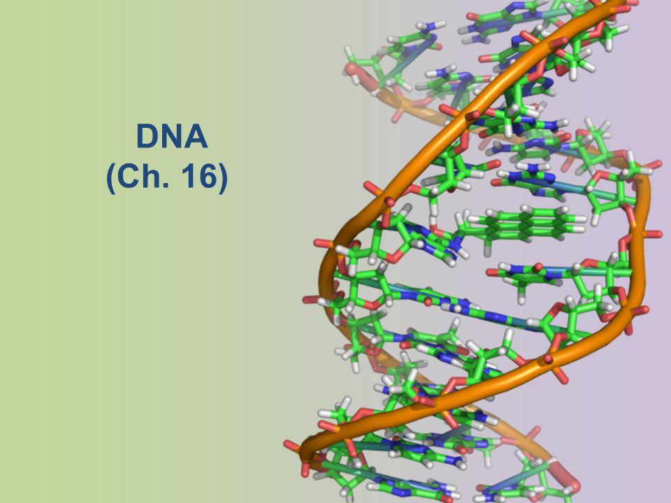 DNA (Ch. 16)