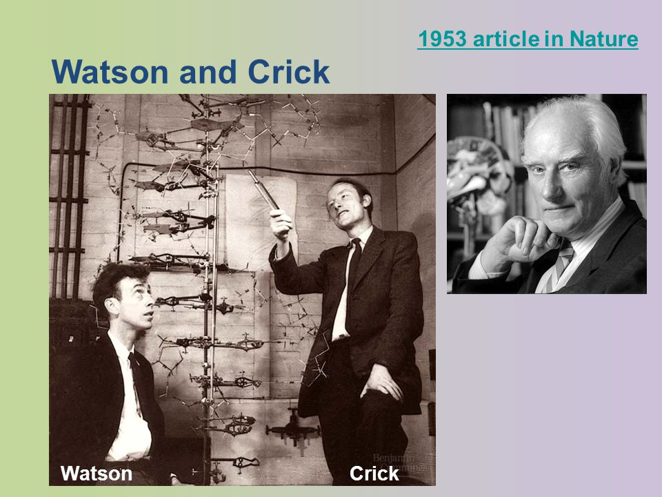 Watson and Crick 1953 article in Nature CrickWatson