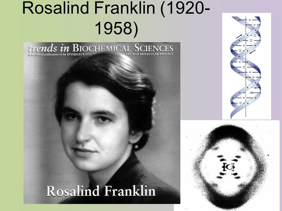 Rosalind Franklin (1920- 1958)