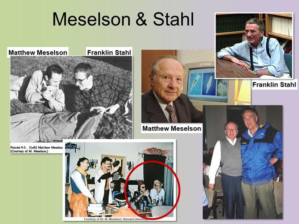 Franklin Stahl Matthew Meselson Franklin Stahl Meselson & Stahl