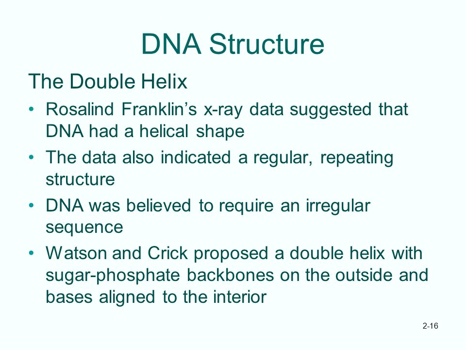 2-16 DNA Structure The Double Helix Rosalind Franklin's x-ray data suggested that DNA had a helical shape The data also indicated a regular, repeating