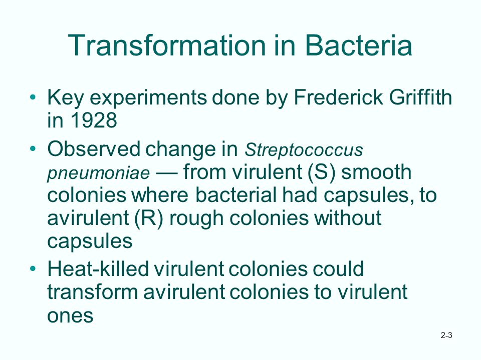 2-3 Transformation in Bacteria Key experiments done by Frederick Griffith in 1928 Observed change in Streptococcus pneumoniae — from virulent (S) smoo