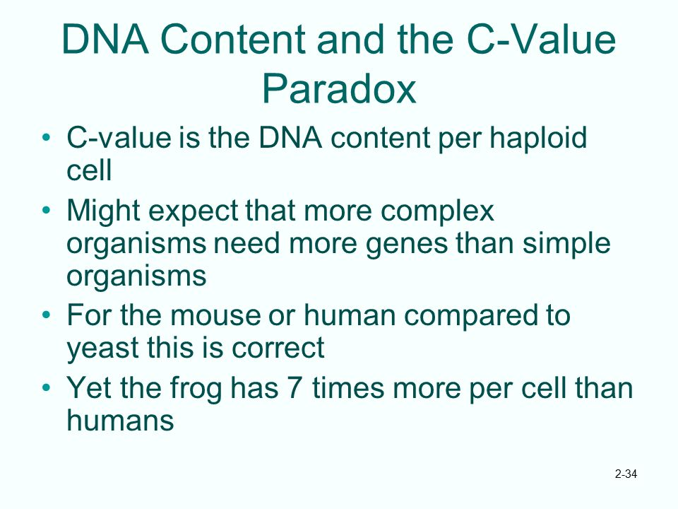 2-34 DNA Content and the C-Value Paradox C-value is the DNA content per haploid cell Might expect that more complex organisms need more genes than sim