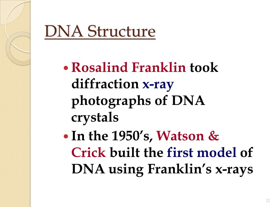 DNA Structure Rosalind Franklin took diffraction x-ray photographs of DNA crystals In the 1950's, Watson & Crick built the first model of DNA using Fr