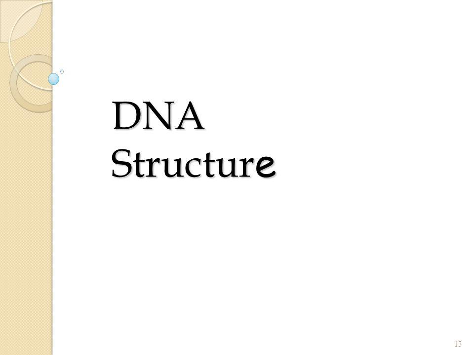 DNA Structur e 13