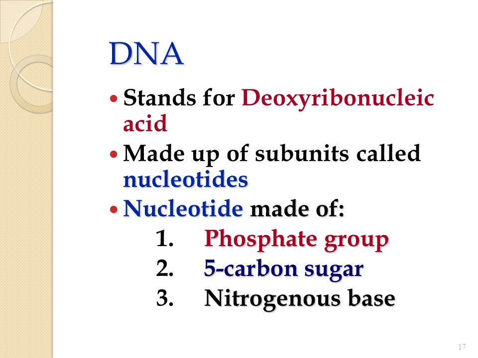 DNA Stands for Deoxyribonucleic acid nucleotides Made up of subunits called nucleotides Nucleotide made of: Nucleotide made of: Phosphate group 1.Phos