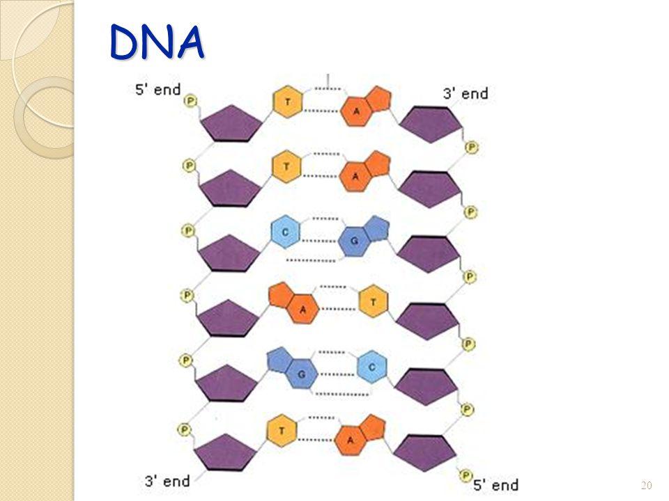 DNA 20