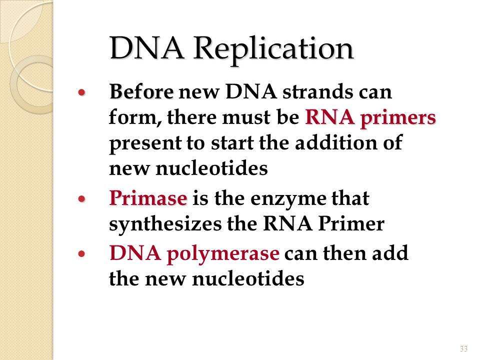 DNA Replication Before RNA primers Before new DNA strands can form, there must be RNA primers present to start the addition of new nucleotides Primase