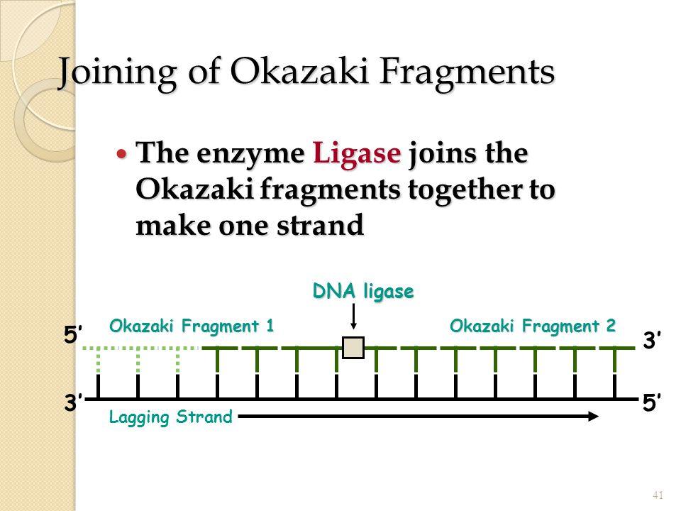 Joining of Okazaki Fragments The enzyme Ligase joins the Okazaki fragments together to make one strand The enzyme Ligase joins the Okazaki fragments t