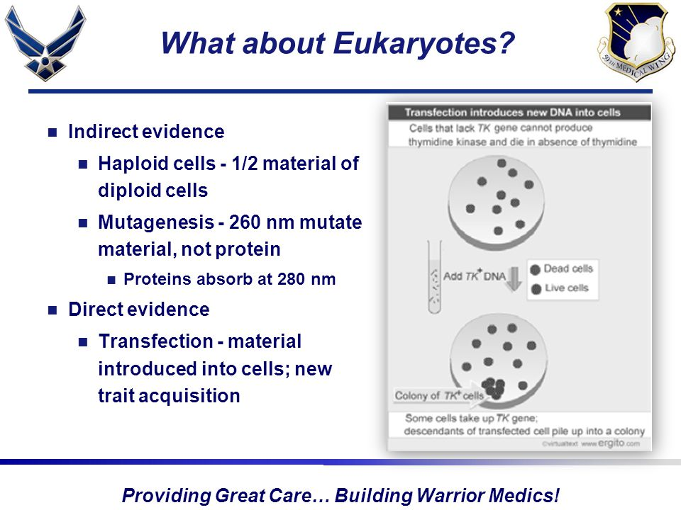 Providing Great Care… Building Warrior Medics. What about Eukaryotes.