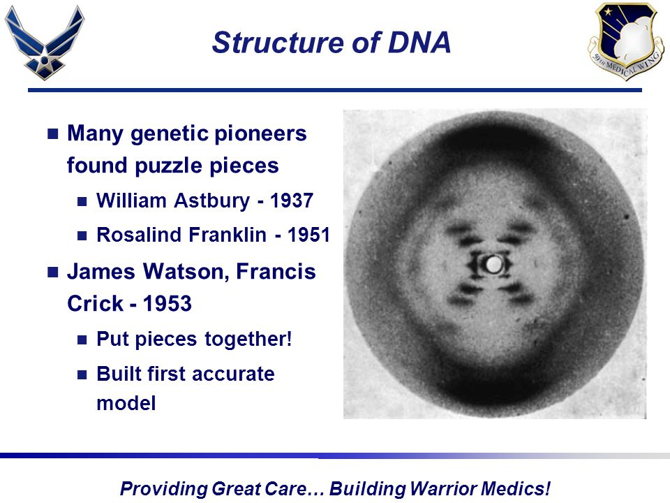 Providing Great Care… Building Warrior Medics! Structure of DNA Many genetic pioneers found puzzle pieces William Astbury - 1937 Rosalind Franklin - 1