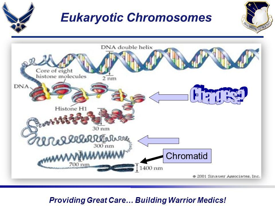 Providing Great Care… Building Warrior Medics! Eukaryotic Chromosomes Chromatid