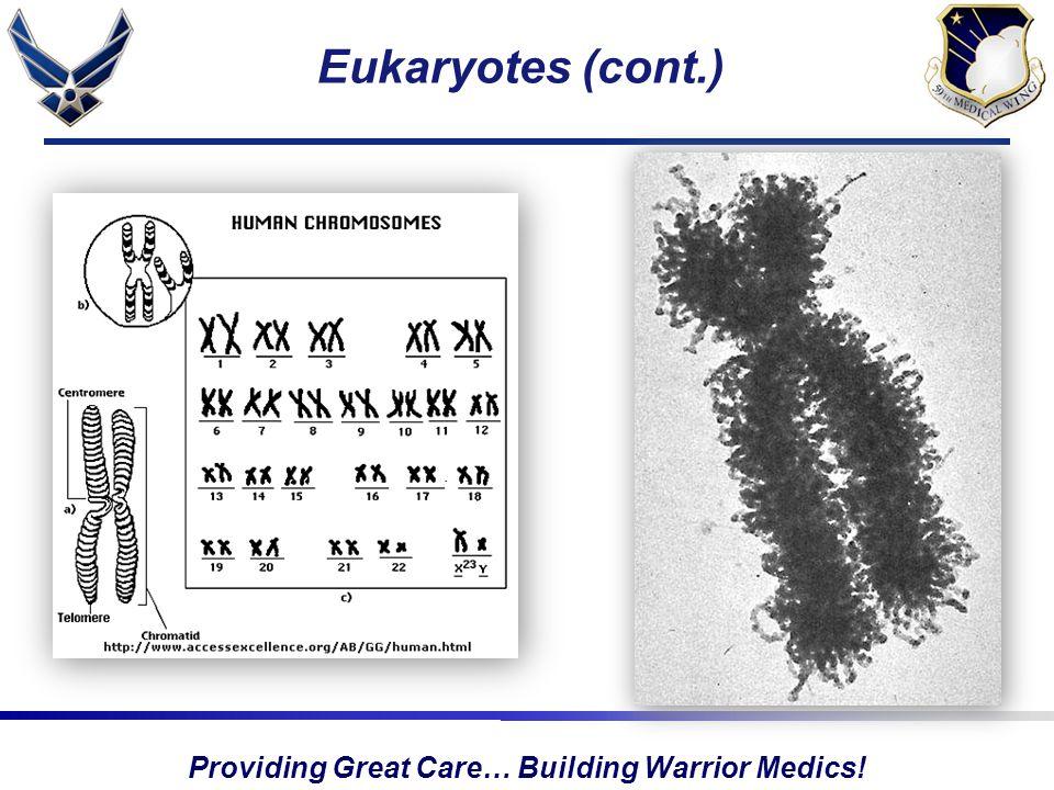 Providing Great Care… Building Warrior Medics! Eukaryotes (cont.)