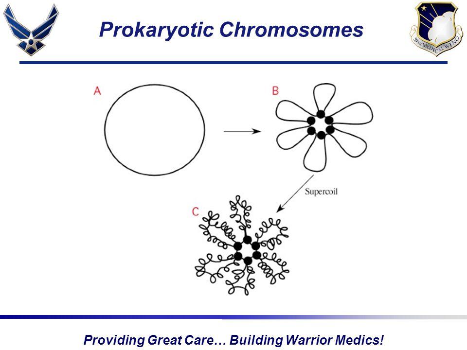 Providing Great Care… Building Warrior Medics! Prokaryotic Chromosomes