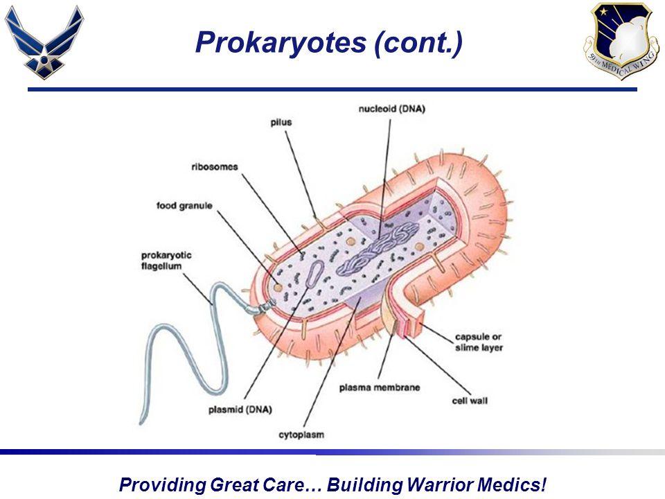 Providing Great Care… Building Warrior Medics! Prokaryotes (cont.)