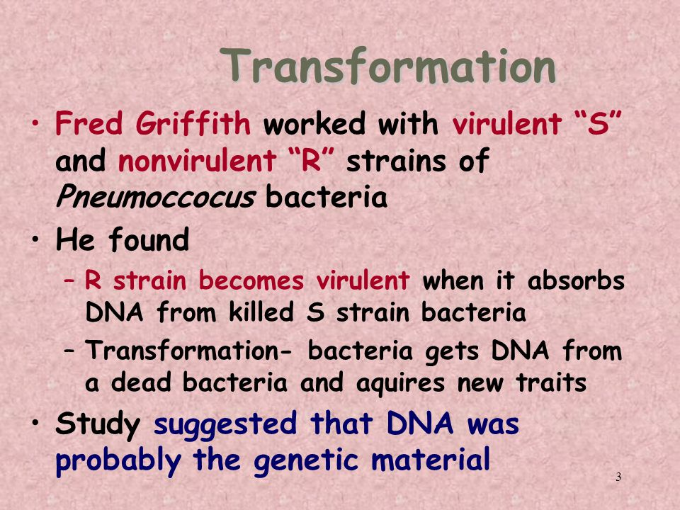 3 Transformation Fred Griffith worked with virulent S and nonvirulent R strains of Pneumoccocus bacteria He found –R strain becomes virulent when it absorbs DNA from killed S strain bacteria –Transformation- bacteria gets DNA from a dead bacteria and aquires new traits Study suggested that DNA was probably the genetic material