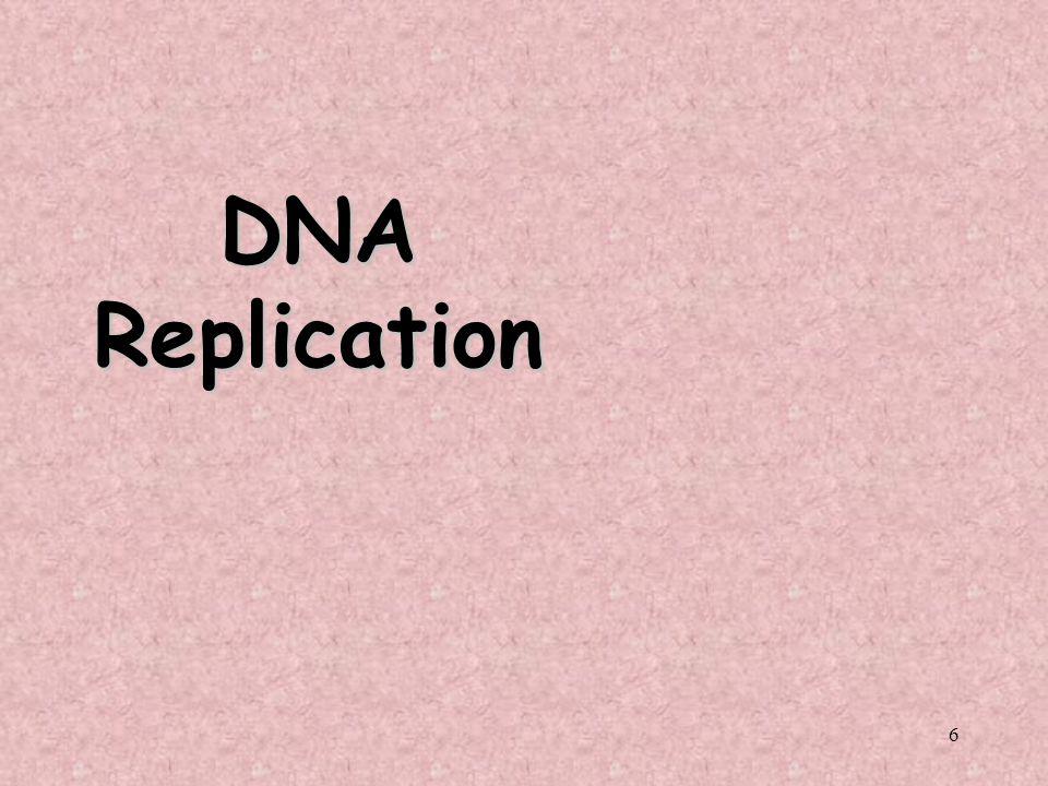 6 DNA Replication