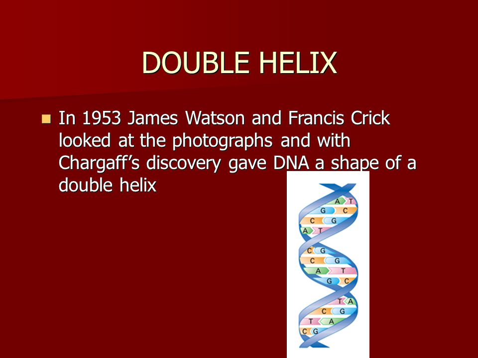 DOUBLE HELIX In 1953 James Watson and Francis Crick looked at the photographs and with Chargaff's discovery gave DNA a shape of a double helix In 1953