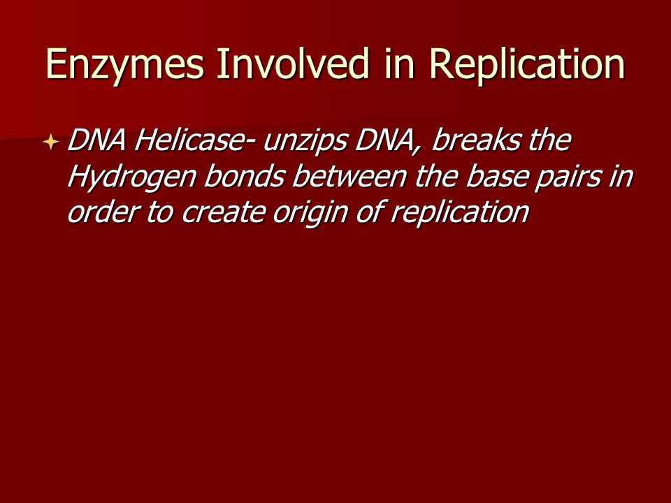 Enzymes Involved in Replication  DNA Helicase- unzips DNA, breaks the Hydrogen bonds between the base pairs in order to create origin of replication