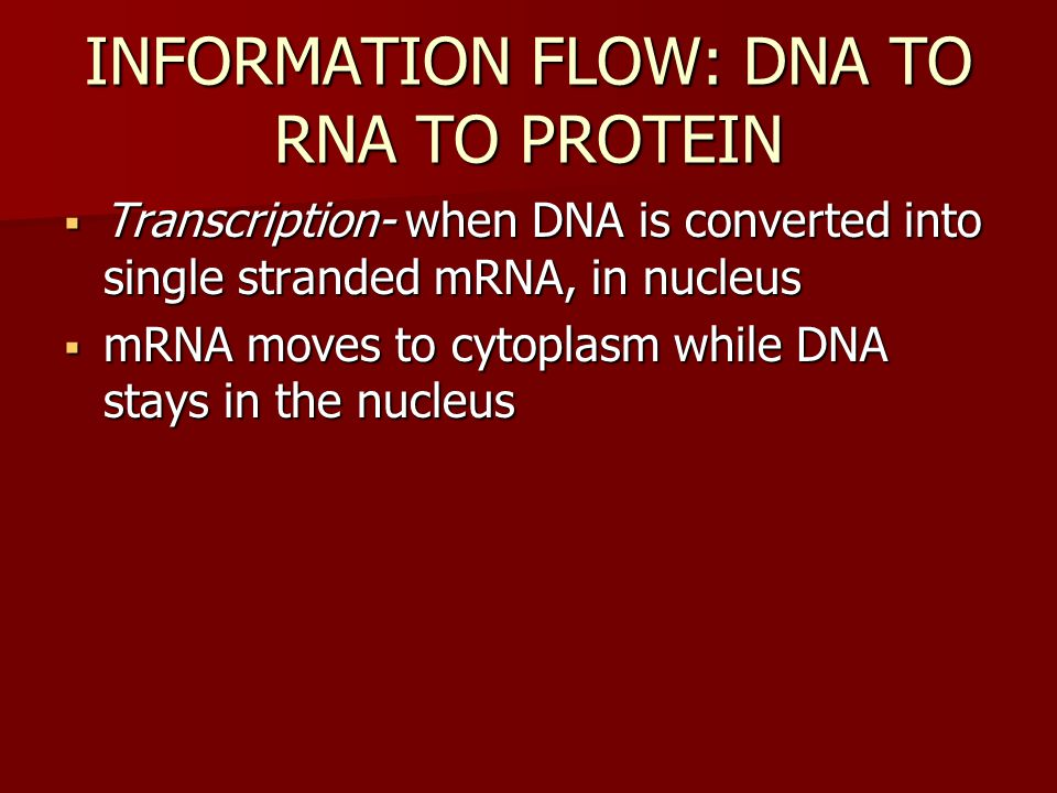  Transcription- when DNA is converted into single stranded mRNA, in nucleus  mRNA moves to cytoplasm while DNA stays in the nucleus