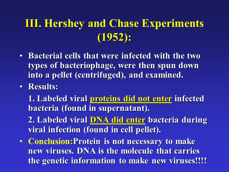 III. (1952): III. Hershey and Chase Experiments (1952): Bacterial cells that were infected with the two types of bacteriophage, were then spun down in