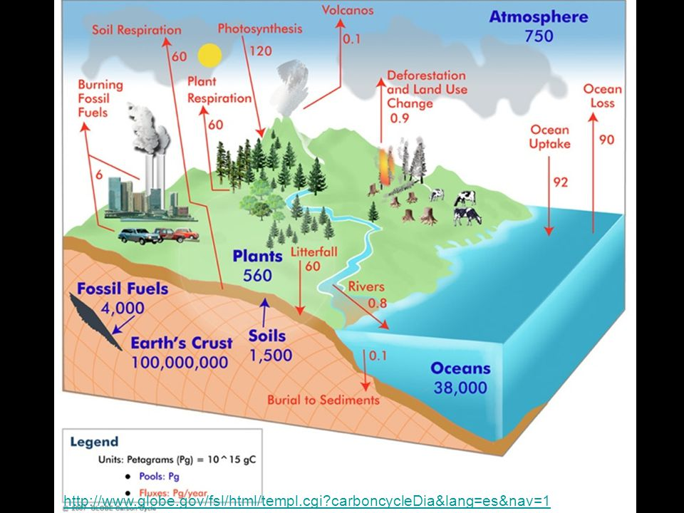 http://www.globe.gov/fsl/html/templ.cgi carboncycleDia&lang=es&nav=1