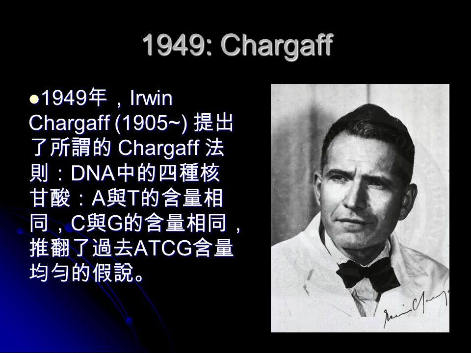 1949: Chargaff 1949 年, Irwin Chargaff (1905~) 提出 了所謂的 Chargaff 法 則: DNA 中的四種核 甘酸: A 與 T 的含量相 同, C 與 G 的含量相同, 推翻了過去 ATCG 含量 均勻的假說。 1949 年, Irwin Chargaff (1905~) 提出 了所謂的 Chargaff 法 則: DNA 中的四種核 甘酸: A 與 T 的含量相 同, C 與 G 的含量相同, 推翻了過去 ATCG 含量 均勻的假說。