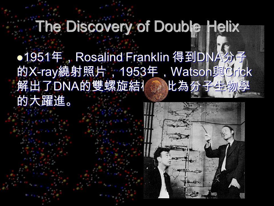 The Discovery of Double Helix 1951 年, Rosalind Franklin 得到 DNA 分子 的 X-ray 繞射照片, 1953 年, Watson 與 Crick 解出了 DNA 的雙螺旋結構,此為分子生物學 的大躍進。 1951 年, Rosalind Franklin 得到 DNA 分子 的 X-ray 繞射照片, 1953 年, Watson 與 Crick 解出了 DNA 的雙螺旋結構,此為分子生物學 的大躍進。