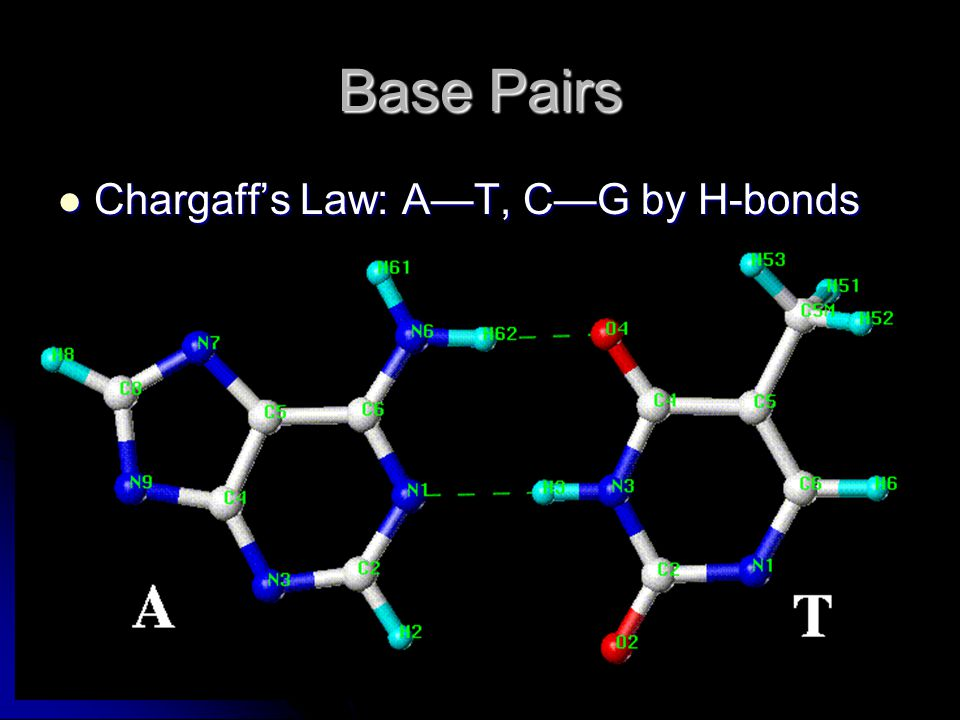 Base Pairs Chargaff's Law: A—T, C—G by H-bonds Chargaff's Law: A—T, C—G by H-bonds