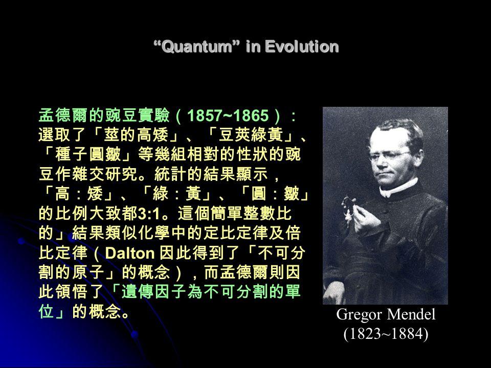 Quantum in Evolution 孟德爾的豌豆實驗( 1857~1865 ): 選取了「莖的高矮」、「豆莢綠黃」、 「種子圓皺」等幾組相對的性狀的豌 豆作雜交研究。統計的結果顯示, 「高:矮」、「綠:黃」、「圓:皺」 的比例大致都 3:1 。這個簡單整數比 的」結果類似化學中的定比定律及倍 比定律( Dalton 因此得到了「不可分 割的原子」的概念),而孟德爾則因 此領悟了「遺傳因子為不可分割的單 位」的概念。 Gregor Mendel (1823~1884)