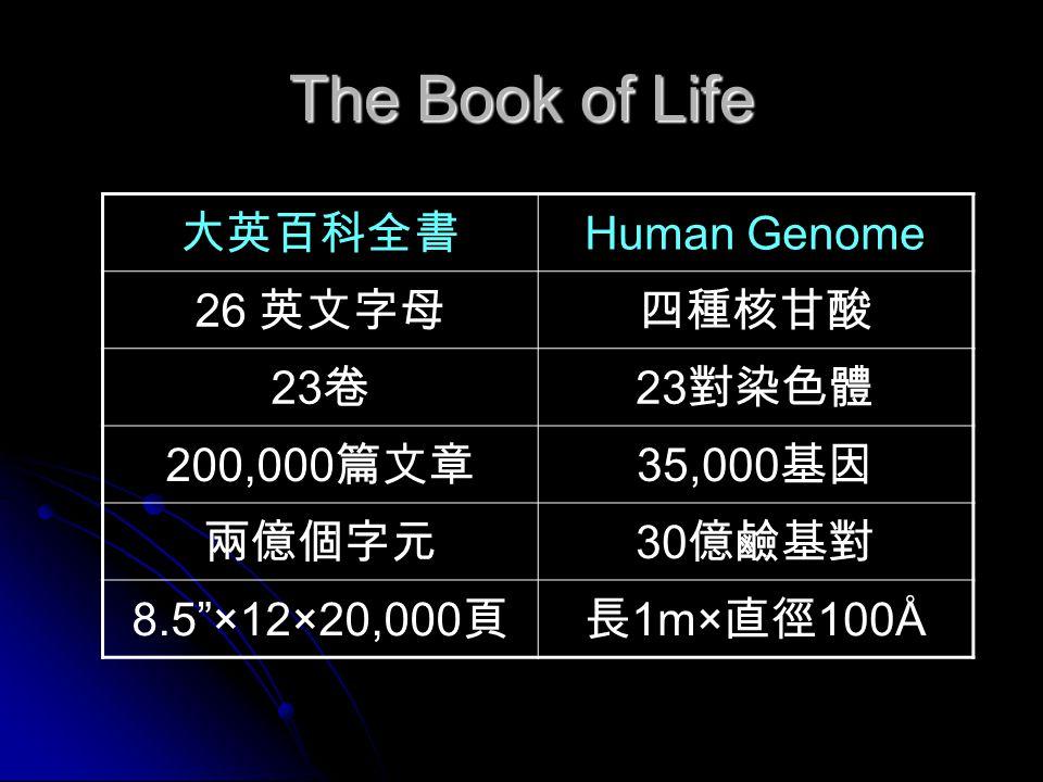 The Book of Life 大英百科全書 Human Genome 26 英文字母四種核甘酸 23 卷 23 對染色體 200,000 篇文章 35,000 基因 兩億個字元 30 億鹼基對 8.5 ×12×20,000 頁長 1m× 直徑 100Å