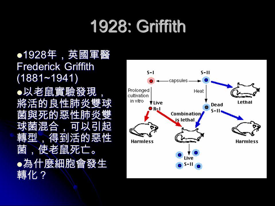 1942: Beadle & Tatum 1942 年, George Beadle (1903~1989) 與 Edward Tatum (1909~1975) 以麵包上 的紅黴菌( Neurospora ) 實驗證實, DNA 上所帶 的遺傳訊息,其功能是 製造特定的酵素。他們 獲得了 1958 年的諾貝爾 生理與醫學獎。 1942 年, George Beadle (1903~1989) 與 Edward Tatum (1909~1975) 以麵包上 的紅黴菌( Neurospora ) 實驗證實, DNA 上所帶 的遺傳訊息,其功能是 製造特定的酵素。他們 獲得了 1958 年的諾貝爾 生理與醫學獎。