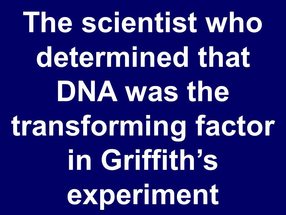 Who are James Watson & Francis Crick?