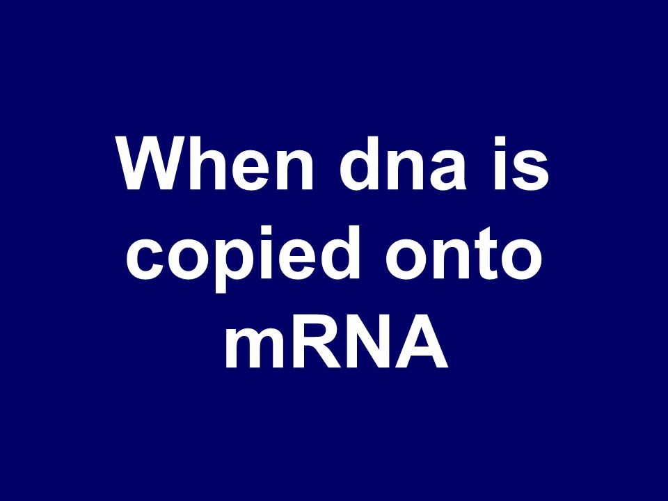 What RNA polymerase